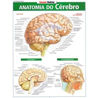 Livro - Resumão Medicina Anatomia do Cérebro - Perez